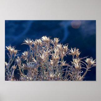 Pflanzen Poster