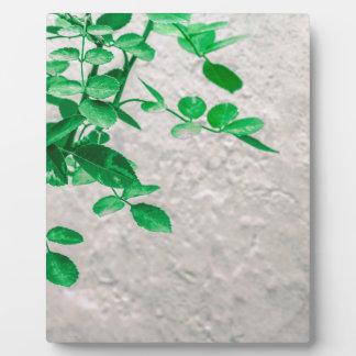 Pflanzen über Wand-Foto Fotoplatte