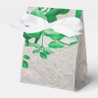 Pflanzen über Wand-Foto Geschenkschachtel