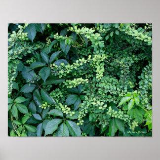 Pflanzen von Kens Garten Poster