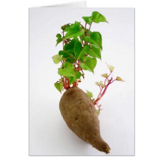 Pflanzensprösslinge der süßen Kartoffel Karte