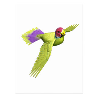 Pflaume ging Parakeet voran Postkarte