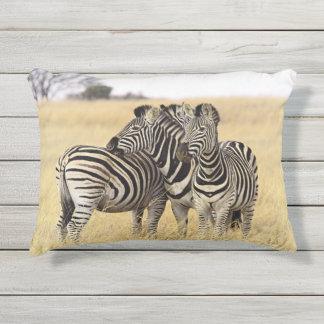 Pflegen Zebras Kissen Für Draußen