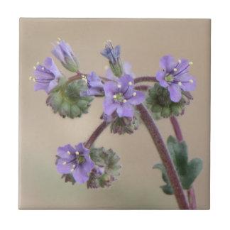 Phacelia lila Wildblumen Keramikfliese