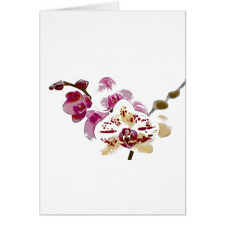 Phalaenopsis-Orchideen-Blumen-Blumenstrauß Karte