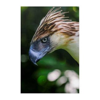 Philippinisches Eagle-Porträt Acryl Wandkunst