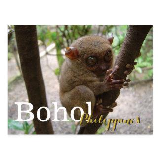 Philippinisches Tarsier von Bohol Postkarte