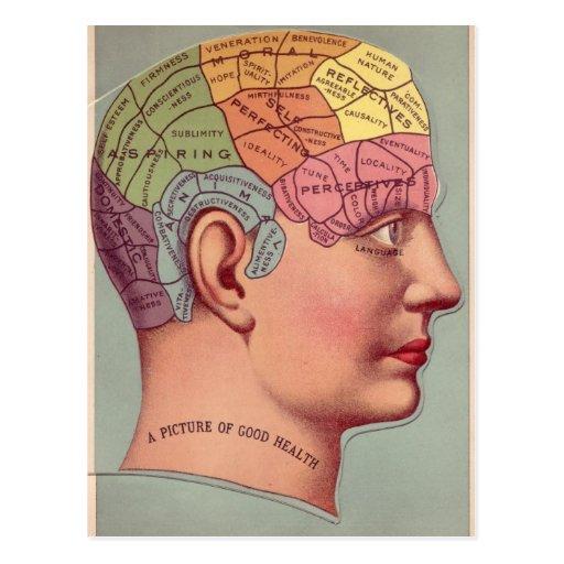 Phrenologie-Kopf in der Farbe Postkarte