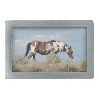 Picasso, Stallion des Sand-Waschbeckens, Colorado Rechteckige Gürtelschnalle