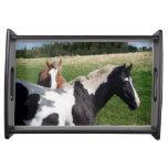 Piebald-u. Kastanien-Pferde in einer Feld-Fotograf Serviertablett