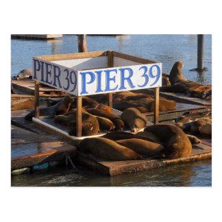 Pier 39 postkarte
