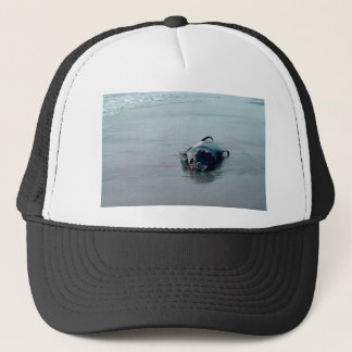 Pigmy-Pottwal, auf den Strand gesetzt Truckerkappe