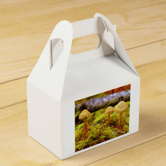 Pilz-Foto-Gastgeschenkkasten Geschenkschachtel