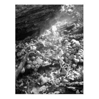Pilz-Sporen freigegeben Postkarte
