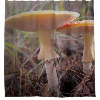 Pilze Duschvorhang