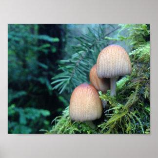 Pilze im pazifischen Nordwesten Poster