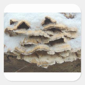 Pilze im Winter Quadratischer Aufkleber