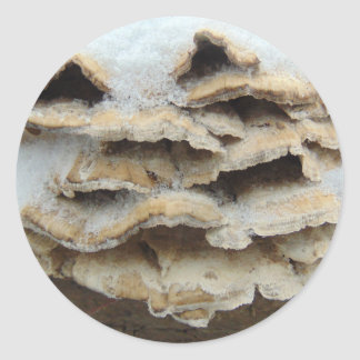 Pilze im Winter Runder Aufkleber