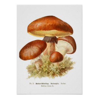 Pilze Poster