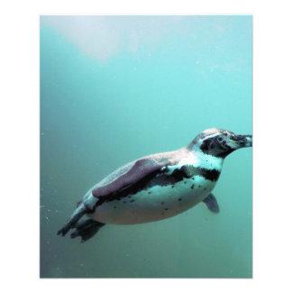 Pinguin 11,4 X 14,2 Cm Flyer