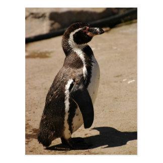 Pinguin bei Blairdrummond Postkarte
