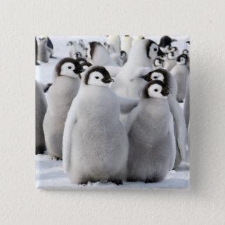 Pinguin-Küken-Freunde - Knopf Quadratischer Button 5,1 Cm