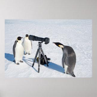 Pinguin-Paparazziplakat Poster