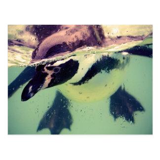 Pinguin Postkarten