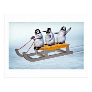 Pinguin-Schlitten Postkarten