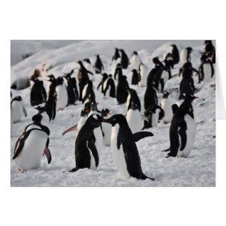 Pinguine am Spiel Karte