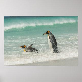 Pinguine, die auf dem Strand schwimmen Poster