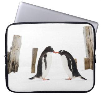Pinguine in der Antarktis küssen - Laptopkasten Laptopschutzhülle