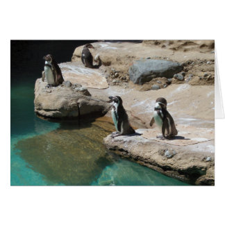 Pinguine Karte