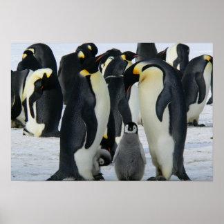 Pinguine Poster