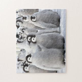 Pinguinfreunde Puzzle
