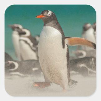 Pinguingruppe auf Strand, Falkland Quadratischer Aufkleber
