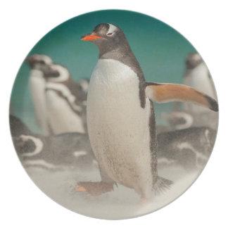 Pinguingruppe auf Strand, Falkland Teller