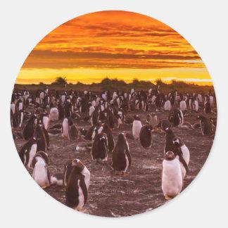 Pinguinkolonie am Sonnenuntergang, Falkland Runder Aufkleber