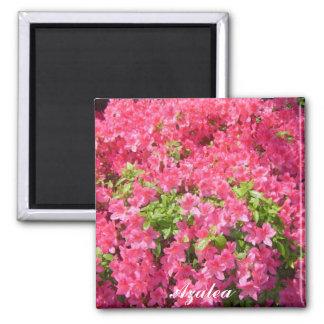 Pink-Azaleen Quadratischer Magnet