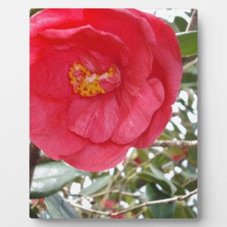 Pink-Kamelie, die auf einem Baum wächst, Fotoplatte