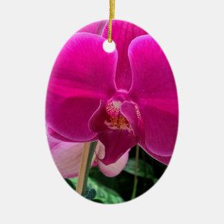 Pink-Orchideen-Fotografie Keramik Ornament