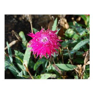 Pinkfarbene Blumen-Fotopostkarte Postkarte