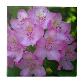 Pinkish lila Rhododendron Catawbiense Keramikfliese