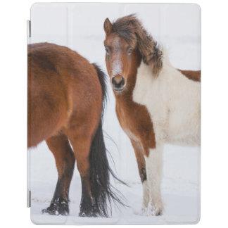 Pinto farbiges isländisches Pferd iPad Hülle