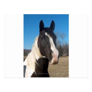 Pinto-Pferd Postkarte