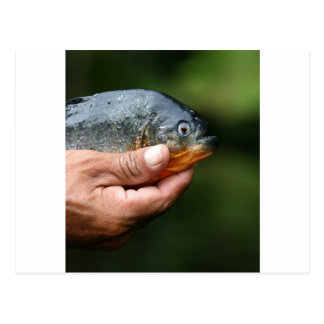 Piranha Amazonas Peru Postkarte