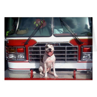 Pitbull-Knochen-Feuer-Haus-Hund Karte