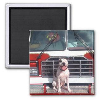 Pitbull-Knochen-Feuer-Haus-Hund Quadratischer Magnet