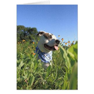 Pitbull-Knochen-Frühling Karte