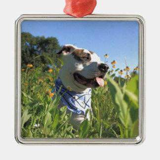 Pitbull-Knochen-Frühling Quadratisches Silberfarbenes Ornament